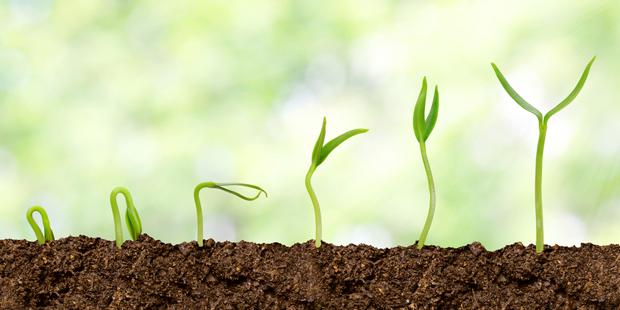 shutterstock_growth_plantsEFM
